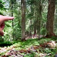 A three part documentary detailing the hunt and hunters of the legendary Bigfoot. Does it walk the forests of North America? Watch and find out!