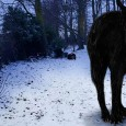 Is this the skeleton of legendary devil dog Black Shuck who terrorised 16th century East Anglia? Folklore tells of SEVEN FOOT hell hound with flaming eyes: According to folklore, Black Shuck terrorised East Anglia in 16th century He towered at seven feet tall, with flaming red eyes and shaggy black […]