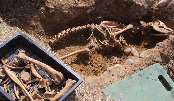 Are these the bones of Black Shuck?