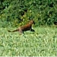 Experts say a teenager's snaps of what appears to be a large cat could indicate they are breeding. Henry Warren, 19, was taking pictures in fields when the huge cat-like creature leapt out in front of him. The sighting took place a few miles from remote Bodmin Moor, where the […]