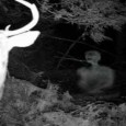 A small collection of strange creatures caught on trail/deer cams across the US.