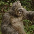 Bigfoot also known as Sasquatch is the ape like creature believed to inhabit all areas of the world but most commonly the Pacific Northwest region of North America. It is described as an enormous, creature with dark brown or reddish brown hair and although it has not been proven to […]