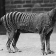 Is the Tasmanian tiger alive and well and living on the mainland? Hunter says the officially extinct animal has been seen 'numerous times'.   A thylacine hunter has claimed the animal is still alive The Tasmanian tiger was declared extinct in 1986 But world-renowned enthusiast Michael Moss claims they're in […]