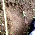 Has a British scientist finally unlocked the mystery of Bigfoot? Yetis–also known as the Abominable Snowman and one of the most elusive Bigfoot legends–have been recorded for centuries in the Himalayas, with local people and even eminent mountaineers claiming to have come face-to-face with the hairy, ape-like creatures. A photograph […]