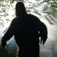 "The existence of Bigfoot has long been debated, and though there is no ""official"" evidence of its existence, there are some that devote their lives to finding one. There are even shows devoted to finding one, like ""Finding Bigfoot."" Here are perhaps 6 of the more believable ones (if there […]"