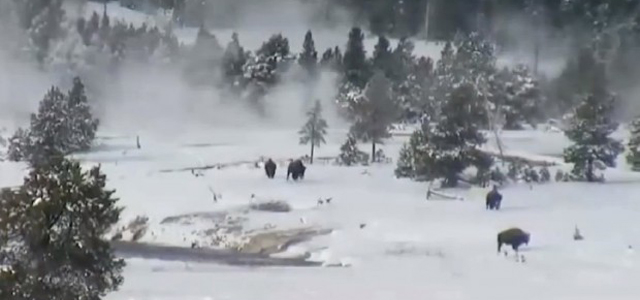 From the uploader: Bigfoot family of six captured on video on Xmas day at Yellowstone? Watch it til the end and see something very unusual that was captured off of Old Faithful's live cam on Christmas day 2016. It all began during a lull in the geyser's eruption cycle when […]