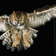The Owlman, sometimes referred to as the Cornish Owlman, or The Owlman of Mawnan, is a purported cryptid that was supposedly sighted around mid 1976 in the village of Mawnan, Cornwall. The Owlman is sometimes compared to America's Mothman in cryptozoological literature. First sighting Doc Shiels' version of a drawing […]