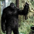 We all need to sit back, relax and laugh a little from time to time and this video featuring the world's most shocking Bigfoot clips may be just the thing! Who'd have ever thought that crypto humour could ever be as funny as this? Much better than the Patterson footage…
