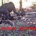 Six years ago, Bigfoot researcher Rick Jacobs captured two trail cam photographs of what the BFRO believe is a Bigfoot. This latest photograph submitted to the website SouthWesternTimes.com by Roger William looks eerily similar what was captured in 2007. According to Williams, the creature in the photograph appears to have […]