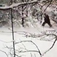 This is the moment a group of Russians captured video footage of what they believed was a Yeti walking through the woods. The footage shows a 'bear-like' figure covered in hair emerging from an area of snow-covered trees in the south-western Adygeya Republic before disappearing again seconds later. A team […]