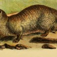 Gef, also referred to as the Talking Mongoose or the Dalby Spook, is the name given to a talking mongoose which was claimed to inhabit a farmhouse owned by the Irving family known as Cashen's Gap near the hamlet of Dalby on the Isle of Man. The story was given […]